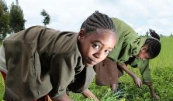 Children picking crops