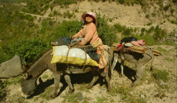 Woman on a donkey
