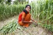 Girl cutting grass