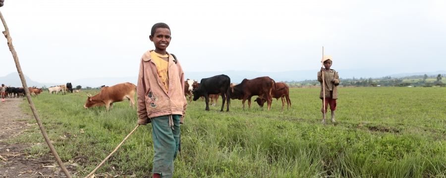 Children farming with cattle