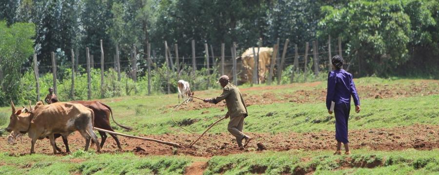 Two people farming
