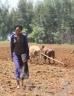 Girl walking across a field next to a farmer