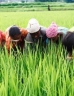 Farmer workers in a field