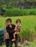 Children in a paddy field