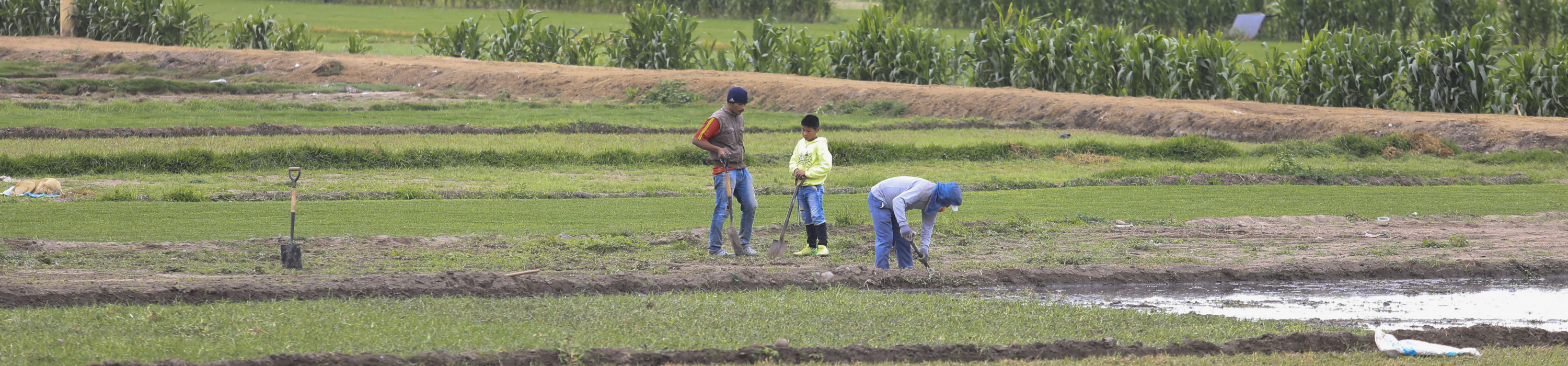 Three people working in a field